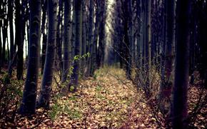 bosque, Los rboles, otoo, Naturaleza