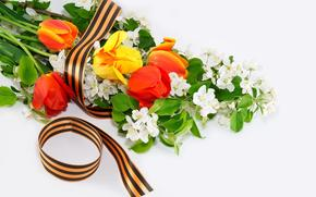 09 de maio, vitria, Flores