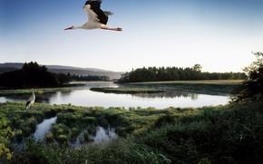 pond, bird, stork, Lake