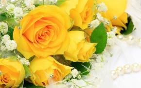 玫瑰, 黄, 花卉