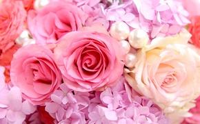 Rose, Beads, beauty