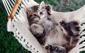 kitten, гамак, feet
