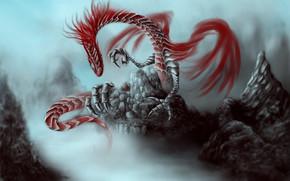 龙, 离合器, 红色