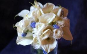 Flores, ramo, ranunkulyus, Callas, jacintos, Color blanco, Color