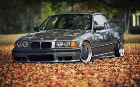 BMW, E36, amg