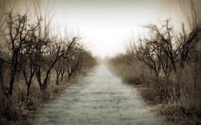 дорога, деревья, туман, утро, пейзаж
