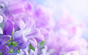 Flowers, Beautiful, Petals, leaflets, World Women's Day, bokeh, Blur, vanilla, vanilka, Bells
