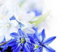цветы, синие цветы, листки