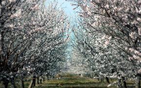 primavera, alberi, giardino, natura