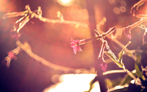 フラワーズ, 色, 太陽, 葉