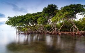 湖, 木, 自然, 風景
