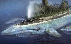 кит, море, остров