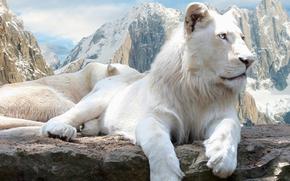 lion, le lion blanc, blanc