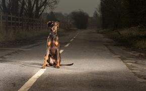cane, vista, amico, strada