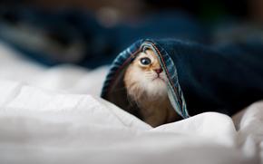 животные, кошка, джинсы, прячется