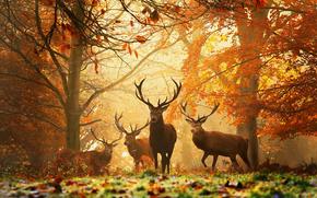 forest, herd, deer
