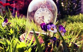 watch, glass, pansy, grass, summer