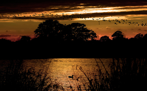 природа, золотой, закат, вечер, силуеты, птицы, небо, вода, река, деревья