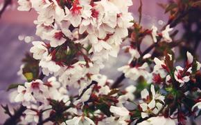 fiori, Bianco, fiorire, primavera