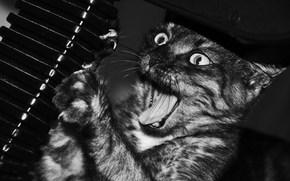 котик, точит ногти, черно-белое