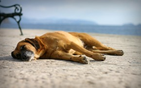 recreation, sleep, dog, beach, sand