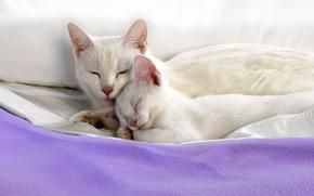 cat, kitten, White, are, sleep