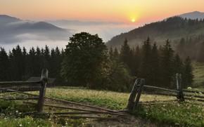 Ukraina, Karpati, Ukraine, Carpathians, Mountains, forest, fencing, grass, Flowers, nature, landscape, sunset, sun, sky, clouds, fog, Trees