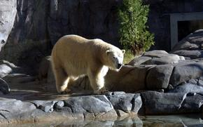 медведь, белый, животные, вода, камни, зоопарк