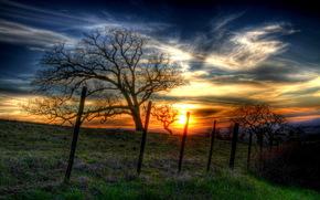 закат, лето, дерево, забор, пейзаж