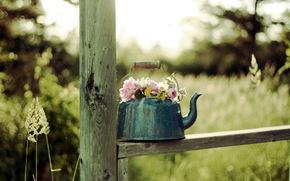 bollitore, fiori, sfondo