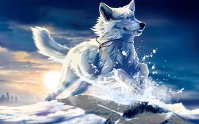 wolf, white, snow, jump, canine, sunset, sun