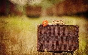 чемодан, цветок, стиль, фон