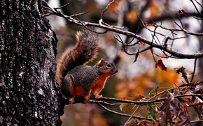 squirrel, forest, tree, branch, foliage, autumn