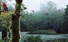 forest, river, Parrots, leopard, Art