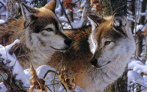 Loups, neige, Art