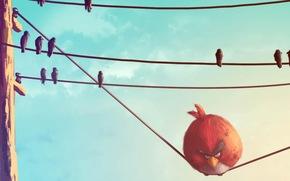 uccelli arrabbiato, rosso, Filo, Uccelli