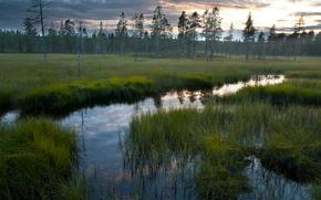 Nature, fort, marais, eau, ciel, herbe, rflexion