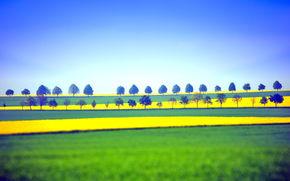 paesaggi, natura, verdura, alberi