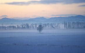 paesaggi, natura, albero