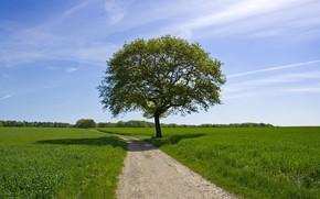t, lgumes verts, champ, route, ciel, solitaire, arbre