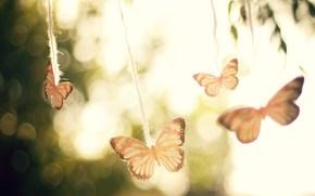 Mariposas, cielo, fondo, reflexiones, Los rboles, luz, aire, viento, humor, Macro