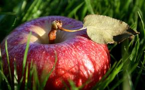 erba, mela, frutta, natura, elenco