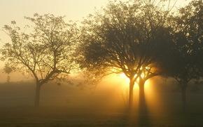 puesta del sol, Los rboles, luz, paisaje