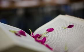 book, text, Petals