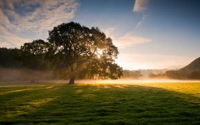 Naturaleza, rbol, niebla, hierba, roco, sol, luz, los rayos