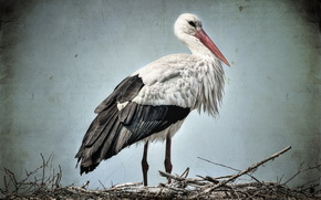 stork, background, style
