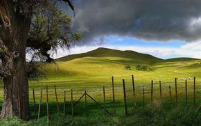 tree, Hills, road, fence, clouds, Meadows, nature, panorama