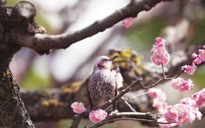 птица, дерево, весна