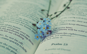 book, text, Flowers, forget-me-