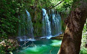 vodpad, 河, 森林, 树